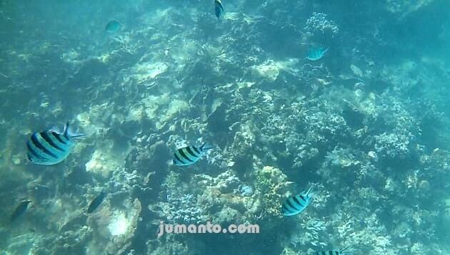 gambar Alam bawah laut Pulau Pahawang Besar